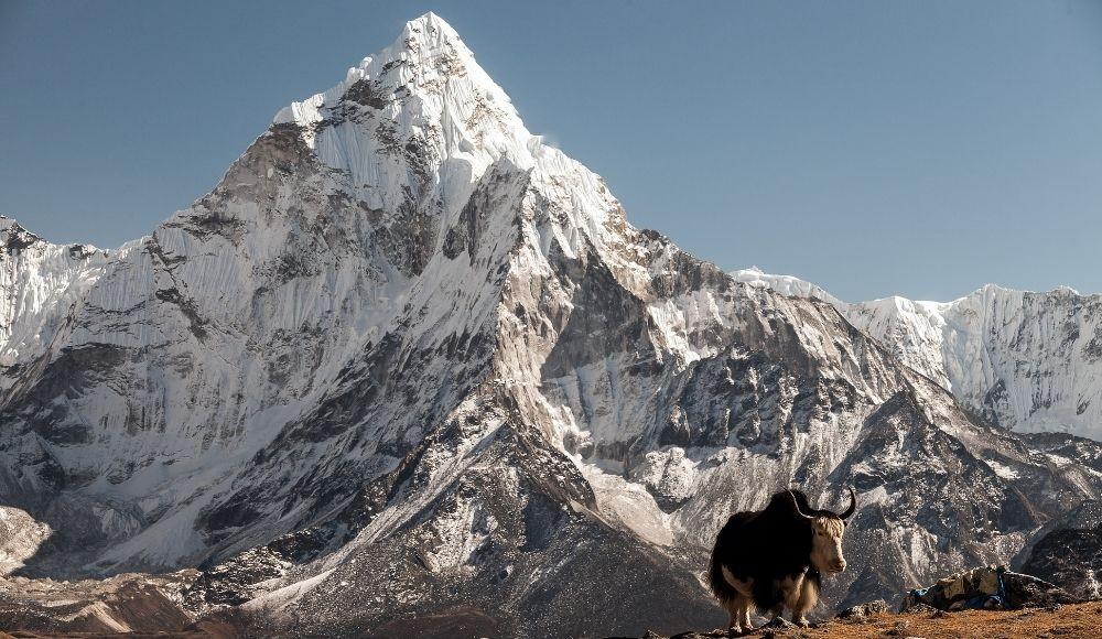 best family treks in Nepal